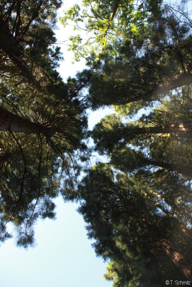 Jugendmesse_Sequoiafarm14